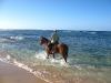 cheval plage-de-la-chapelle